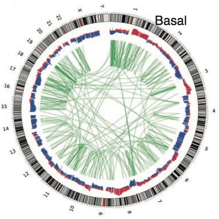 Genomics of Basal TNBC