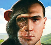 human-chimpanzee differences