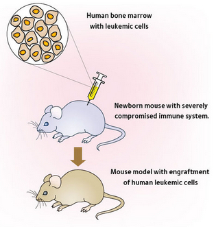 mouse models functional validation