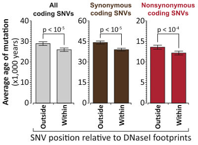 Age of coding SNVs in footprints