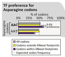 TF codon preference