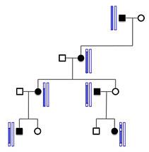 MendelScan exome pedigree