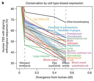 TSS conservation by cell type