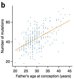 paternal age and mutation rate