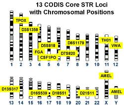 Codis DNA forensics loci
