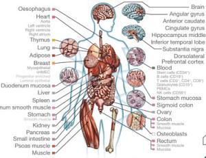 Human epigenome tissues