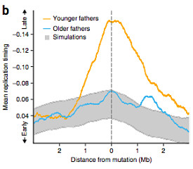 de novo mutations and paternal age
