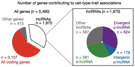 Cell type trait gene associations